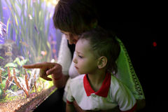 Mother and son looking at fishes Stock Images