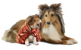 Mother and son sheltie. Watercolor painting Stock Photos