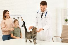 Mother and son with their pet visiting veterinarian. Doc examining cat. Mother and son with their pet visiting veterinarian in clinic. Doc examining cat stock photos