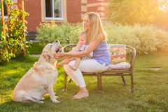 Mother and son together having fun in the summer park playing with a golden retriever. stock photography