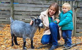 Family touching goat in Zoo. Mother and son touching goat in Zoo Stock Photo