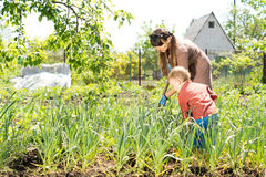 Mother and son in the vegetable garden Royalty Free Stock Photos