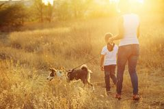 Mother and son are walking with a dog. In the countryside at sunset Royalty Free Stock Images