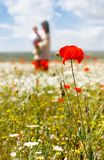 Mother and son walking in flowers. Focus on poppy Royalty Free Stock Images