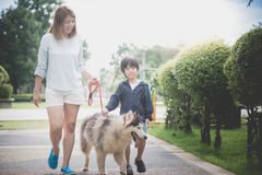 Mother and son walking with a siberian husky don in the park. Asian mother and son walking with a siberian husky don in the park Stock Images