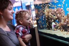 Mother and son watching fishes Stock Photos