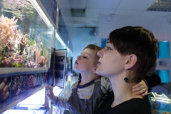 Mother and son watching fishes Royalty Free Stock Image