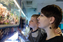 Mother with son watching fishes Stock Photo
