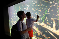 Mother with son watching marine life Royalty Free Stock Images