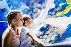 Mother and son watching sea life in oceanarium. Fascinated mother and son watching sea life in oceanarium Royalty Free Stock Image