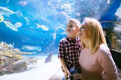Mother and son watching sea life in oceanarium royalty free stock photos