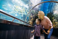 Mother and son watching sea life in oceanarium royalty free stock photo