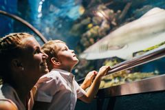 Mother and son watching sea life in oceanarium Stock Images