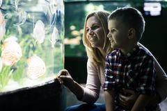 Mother and son watching sea life in oceanarium. Fascinated mother and son watching sea life in oceanarium Stock Image