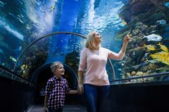 Mother and son watching sea life in oceanarium. Fascinated mother and son watching sea life in oceanarium Stock Photo