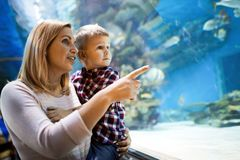 Mother and son watching sea life in oceanarium. Fascinated mother and son watching sea life in oceanarium Royalty Free Stock Photos