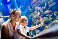Mother and son watching sea life in oceanarium. Fascinated mother and son watching sea life in oceanarium Stock Photography