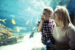 Mother and son watching sea life in oceanarium stock photography