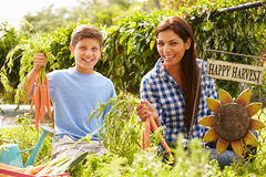 Mother And Son Working On Allotment Together Royalty Free Stock Photo