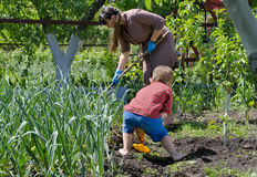 Mother and son working in the vegetable garden Stock Photo