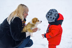 Mother, sonny and puppy of the Welsh Corgi Royalty Free Stock Photo