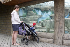 Mother with sons looking at tiger. Mother with hir sons looking at tiger in a zoo royalty free stock photography