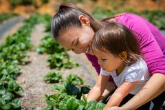 A mother teaching her child how to grow plants and veggies in a garden. Raising and caring for a organic farm stock photos