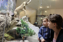 Mother tells her son about tiger. In zoological museum stock photos