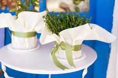 Mother-of-Thyme in a flowerpot. On a white outdoor table Stock Image