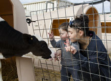 Mother and Toddler petting a calf Stock Photo
