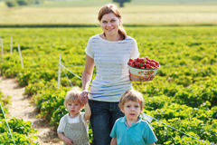 Mother and two little sibling boys on organic strawberry farm Royalty Free Stock Photography