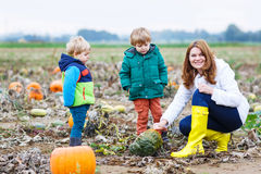 Mother and two little sons having fun on pumpkin patch. Royalty Free Stock Photography