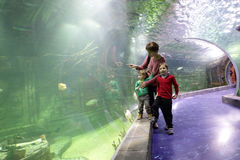 Mother with two sons looking at fishes Stock Images