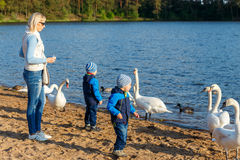 Mother and two twin brothers feeds the swans Royalty Free Stock Photography