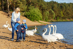 Mother and two twin brothers feeds the swans Royalty Free Stock Image