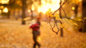 Mother walking in park with baby in the blurred. Mother and baby walking in the blurred background with autumn leaves in front. Slow motion 1080p 25fps stock video footage