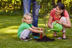 Mother watering a tree stock photo