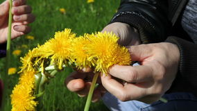 Mother weaves a wreath of dandelions stock footage