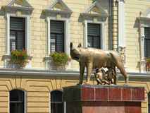 Mother wolf with Remus and Romulus. Mother wolf with Remus and Romulus in front of the new Brasov city hall Royalty Free Stock Image