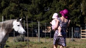 Mother with young child touching a white horse stock footage