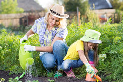 Mother and young daughter planting strawberry in home garden field Royalty Free Stock Images