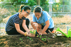 Mother and young daughter planting vegetable in home garden fiel Royalty Free Stock Photos