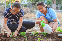 Mother and young daughter planting vegetable in home garden fiel Royalty Free Stock Images