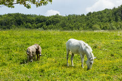 Mother and Young: Ponies. Royalty Free Stock Photography