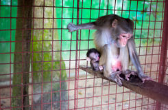 Motherhood Stock Image