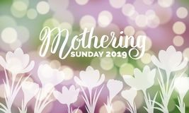 Mothering Sunday 2019 typography on bokeh background with crocus flowers vector illustration. royalty free illustration