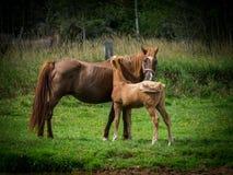 Motherly влюбленность Стоковые Изображения RF