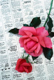 Mothers Day. A rose on mothers day announcments Royalty Free Stock Photo