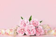 Mothers day backgrounds, pink carnations on the pink background. Mothers day banners, pink carnations on the pink background Stock Image