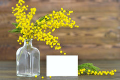 Mothers Day card and mimosa Stock Image